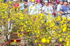 Aprikosenblumen, die neues Mondjahr Vietnams verkaufen Stockfotografie
