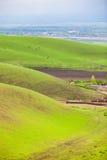 Aprikosenc$vally-gräser Lizenzfreie Stockfotografie