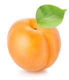 aprikosleaf Arkivfoto