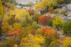 Aprikosträd i den Hoper dalen, nordliga Pakistan Royaltyfri Bild