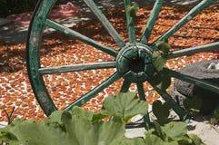 Aprikosuttorkning för förberedelsen för vinter royaltyfria foton
