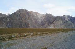 April in Altai  Royalty-vrije Stock Foto