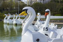 26 April 2018 Bangor Northern Ireland. Swan themed pedalos for hire in the popular Pickie Centre empty on a cool spring morning. 26 April 2018 Bangor Northern royalty free stock image