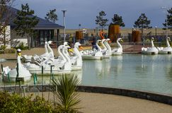 26 April 2018 Bangor Northern Ireland. Swan themed pedalos for hire in the popular Pickie Centre on a cool spring morning. 26 April 2018 Bangor Northern Ireland stock photos