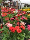 April-bloemen Royalty-vrije Stock Foto