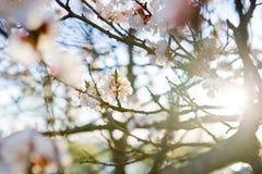 april blossontree arkivfoton