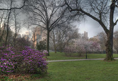 April cherry blossom Royalty Free Stock Photo