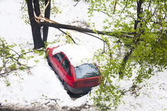 April, 2017. Chisinau, Moldova. Snowfall over green trees - abnormal weather. April, 2017. Chisinau, Moldova Snowfall over green trees - abnormal weather Royalty Free Stock Photos