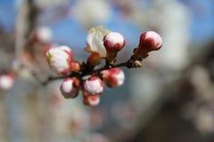 April, de bloeiende bomen, wekten de knoppen van de bloemen het aroma van insecten omhoog de zon is warme Zonnig Royalty-vrije Stock Afbeeldingen