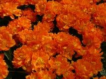 April-Farben von Holland 20 stockfoto