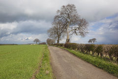 April farm track. English rural landscape with a farm track trees and hedgerows and young barley crop under a cloudy springtime sky Royalty Free Stock Image