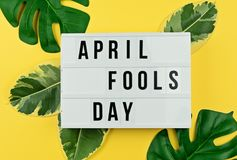 April Fool`s day and tropical leaves on yellow. Felicitation text April Fool`s day in cinematic light box and tropical leaves on yellow background Greeting card Stock Photo