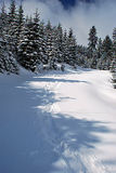 April forest in Beskydy mountains with lot of fresh snow Stock Photo