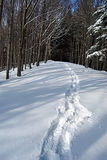 April forest in Beskydy mountains with lot of fresh snow Stock Photography