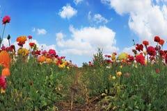 April in het hete zuiden Royalty-vrije Stock Afbeeldingen