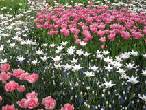 April målarfärger av Holland 1 Arkivfoto