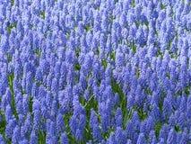 April målarfärger av Holland 19 Fotografering för Bildbyråer