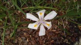 april medf8or blommor kan duschar Royaltyfri Fotografi
