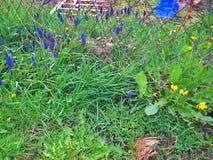 april medf8or blommor kan duschar Arkivfoto