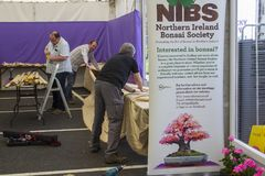 Members of the Northern Ireland Bonsai Society building their display stands for the Belfast Spring Festival at Barnett`s Demesne. 20 April 2018 members of the stock photography