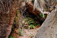 Spring Vegetation at Zion royalty free stock images
