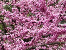 April Purple Flowers During Spring stockfoto