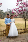 April 2016 - Qingdao, China - Chinese couple doing wedding pictures during the cherry blossoms festival Royalty Free Stock Photos