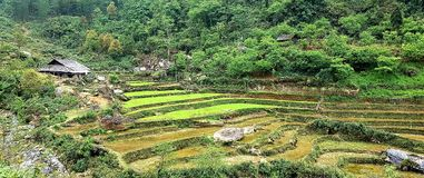 April on rice fields of Sa Pa stock photo
