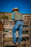 APRIL 22, 2017, RIDGWAY COLORADO: American Cowboy during cattle branding  at Centennial Ranch, Ridgway, Colorado- a cattle ranch o Stock Images