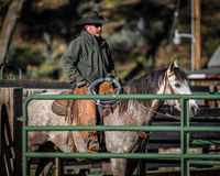 APRIL 22, 2017, RIDGWAY COLORADO: American Cowboy during cattle branding exchange words, at Centennial Ranch, Ridgway, Colorado- a. Cattle ranch owned by Vince Royalty Free Stock Image