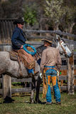 APRIL 22, 2017, RIDGWAY COLORADO: American Cowboys during cattle branding exchange words, at Centennial Ranch, Ridgway, Colorado-  Stock Image