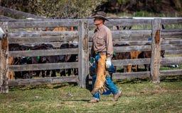 APRIL 22, 2017, RIDGWAY COLORADO: Amerikansk cowboy under nötkreatur som brännmärker på den hundraårs- ranchen, Ridgway, Colorado Royaltyfria Bilder