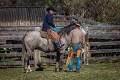 APRIL 22, 2017, RIDGWAY COLORADO: Amerikanska cowboyer under nötkreatur som brännmärker utbyte, uttrycker, på den hundraårs- ranc Arkivfoton