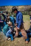 APRIL 22, 2017, RIDGWAY COLORADO: Cowboymärkesnötkreatur på den hundraårs- ranchen, Ridgway, Colorado - en ranch med det Angus/He royaltyfri fotografi