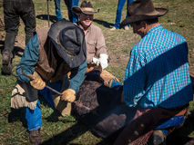 APRIL 22, 2017, RIDGWAY COLORADO: Cowboys brand cattle on Centennial Ranch, Ridgway, Colorado - a ranch with Angus/Hereford cross, Royalty Free Stock Photo