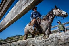 APRIL 22, 2017, RIDGWAY COLORADO: Cowboys  Stock Photos