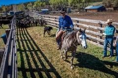 APRIL 22, 2017, RIDGWAY COLORADO: Cowboys  Royalty Free Stock Photos