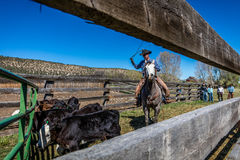 APRIL 22, 2017, RIDGWAY COLORADO: Cowboys  Royalty Free Stock Image