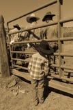 APRIL 22, 2017, RIDGWAY COLORADO: Unga cowboyklockor avlar märkesnötkreatur på den hundraårs- ranchen, Ridgway, Colorado - en ran Royaltyfria Foton