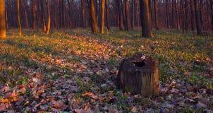 April skog Royaltyfri Fotografi