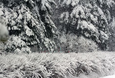 April snow Stock Image