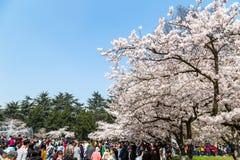 April tot bloei 2016 - Qingdao, China - de Toeristen tijdens de kers komt festival Royalty-vrije Stock Foto