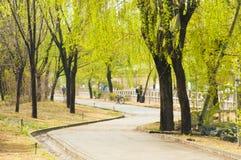 April vår i det tsinghua universitetet Arkivbild