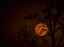 April waning gibbous moon Stock Image