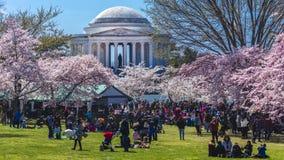 APRIL 8, 20918 - WASHINGTON D.C. - Jefferson Memorial framed by Cherry Blossoms on Tidal Basin,. Washington, dc royalty free stock photo