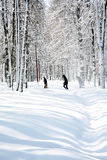 April weather in birch grove Stock Photography