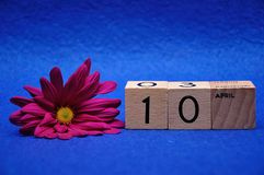 10 April on wooden blocks with a purple daisy. On a blue background royalty free stock images