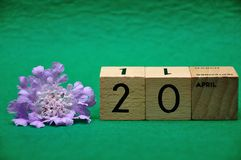 20 April on wooden blocks with a purple flower. On a green background royalty free stock images