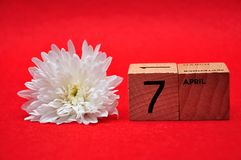7 April on wooden blocks with a white daisy. On a red background royalty free stock image