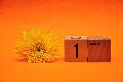 1 April on wooden blocks with a yellow daisy. On an orange background royalty free stock photo